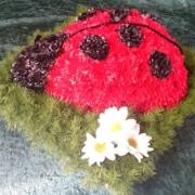 Ladybird £60
